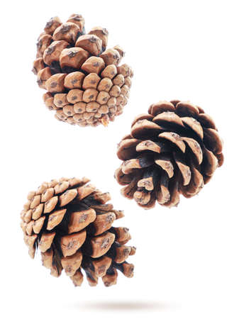 Pine cones fly on a white background, levitating. Isolated