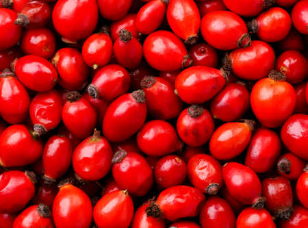 Fresh rose hips close up, rose hips background. The view from top Stok Fotoğraf