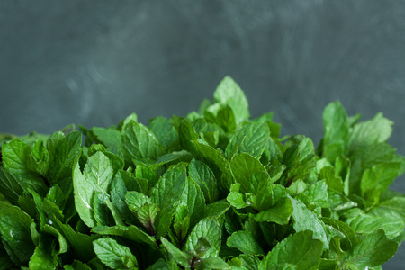 two and two thirds: Mint leaves on two-thirds gray background with drops of water (closeup, macro view) Stock Photo