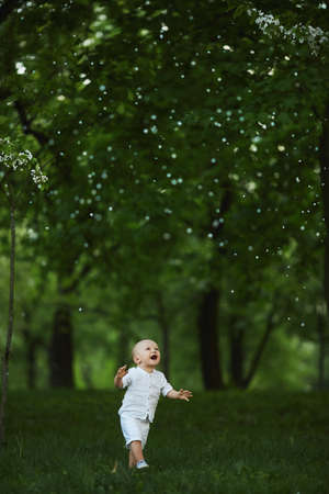 Adorable toddler boy walking by the green grass under the blossom tree at the city park 免版税图像