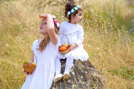 Summer.Harvest. Shavuot. Two cute smiling little girls holds basket with fruits in a wheat field. Portrait adorable small kids outdoor.