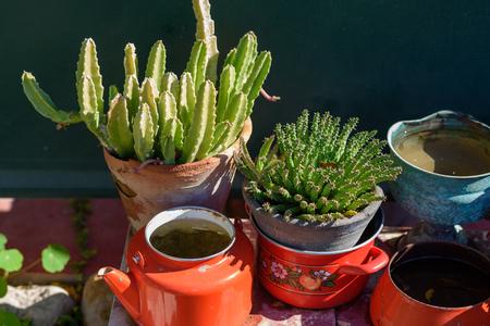 Succulent and cactus. Euphorbia and Stapelia plants Design garden.