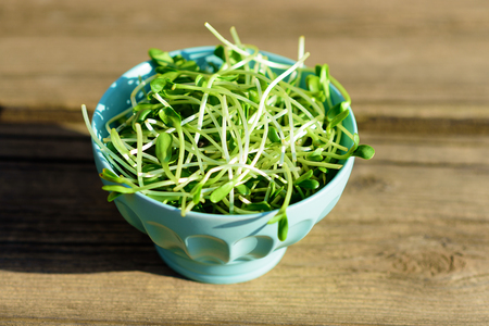 Healthy Green Organic Raw Sunflower sprouts ready for eating or smoothie. Young raw fresh green sprigs in ceramic bowl on rustic wooden table at sunny spring day.