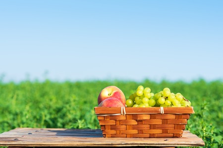 Shavuot: Festival of First Fruits habikkurim. Grapes and peaches on basket outside on the green meadow and blue sky background at sunny summer day.Happy holidays moments, healthy breakfast concept.