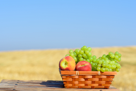 Shavuot: Festival of First Fruits habikkurim. Grapes and peaches in basket outdoor on the gold wheat field and blue sky background at sunny summer day. Autumn harvest concept. Copy space for text. 版權商用圖片