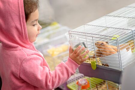 A child feeding hamster a water.Toddler child give water to the animal from feeding water bottle.