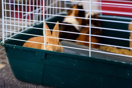 The sad bunny inside Cage for small Pets looking at camera.