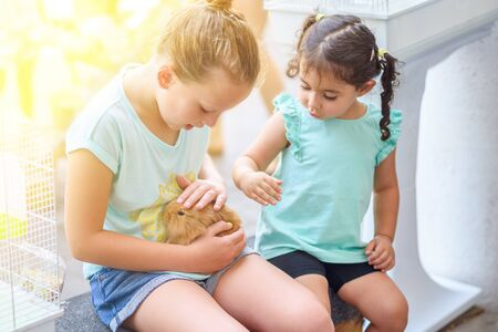 Little girls playing with rabbit in sunny day outdoor.Two happy young girls playing with bunny in a pet shop.