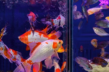 2020 Color Trends. Aquarium with blue water and vibrant lush lava and gray colorful fish. Selective focus, contrasting colors. 写真素材