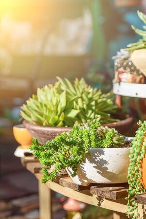 Group of succulent plants in a sunny garden. Banco de Imagens - 137896720
