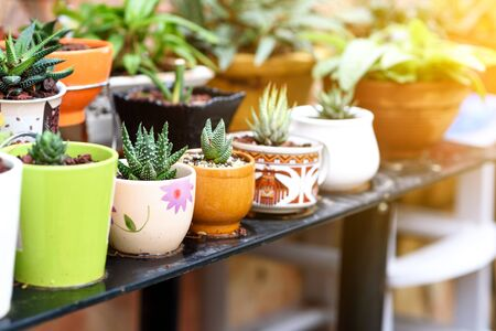 Various Succulent Plants Pots At Homemade Stand In A Garden At Sunny Day.