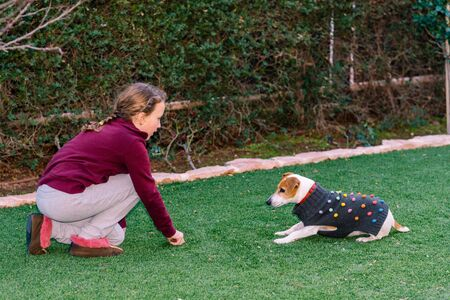 Little dog wearing a sweater playing with owner. Teenager girl having fun with cute and fashionable pet in garden.