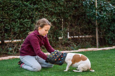 Beautiful teen girl dressing sweater on her small dog. Pet fashion.Series. Image 1.