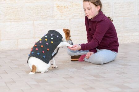 Small dog wearing a sweater playing and with owner. Pet gives paw. Teenager girl having fun with cute and fashionable pet in backyard.Selective focus on kid.