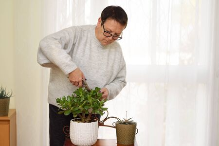 Active happy elderly woman cares at home for plants in the home garden.