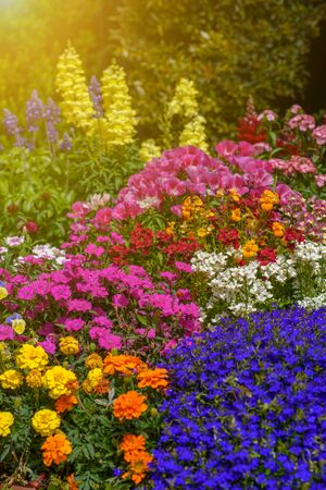 Flowers in bloom.Beautiful garden on a sunny day. Group of pansy flowers, snapdragon flower, and other amazing plants. Colorful flower bed blue, yellow, orange, pink, purple flowers. 写真素材