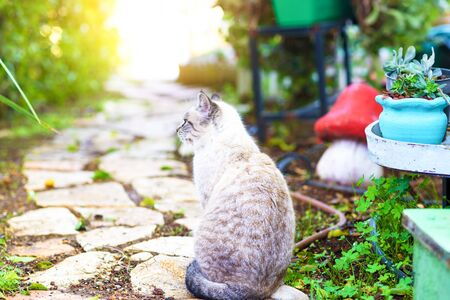 Fluffy cat with bright blue eyes looking up away by sunny day.
