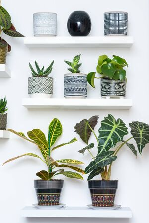 Garden room. Succulent Plants In Geometric Ornamented Art Deco Style Flower Pots. Home Gardening. Reklamní fotografie