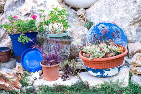 Reused planter ideas. Second-hand blue bucket, dish, retro basin and old straw baskets turn into garden flower pots.