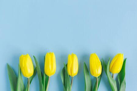 在淡色蓝色背景的嫩黄色郁金香。母亲节的贺卡。平躺。文字的地方。