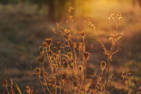 Beautiful autumn meadow in a sunset light. Nature autumn background. Selective focus.