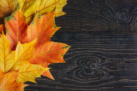 Beautiful yelow and orange maple leaves on a dark rustic background. Autumn background. Flat lay. Place for text.