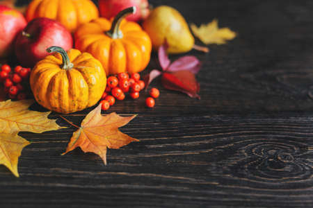 Autumn background with pumpkins, apples, pear, rowan berries and golden maple leaves. Dark rustic wooden background. Place for text.