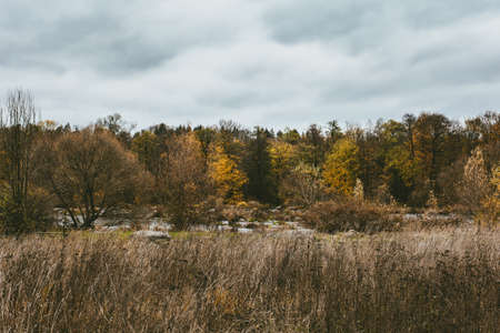 Beautiful autumn landscape with a river and a forest. Late fall. Amazing gray cloudy sky. 免版税图像