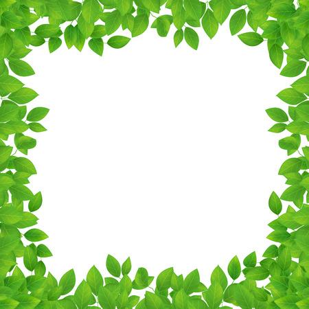 leaves frame: marco de hojas Vectores