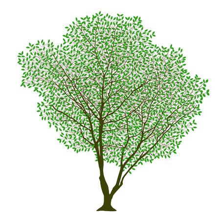 lush: lush trees