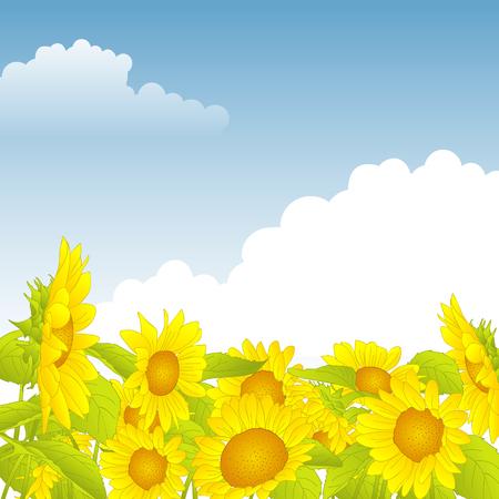 girasol: campo de girasoles amarillos bajo un cielo azul Vectores