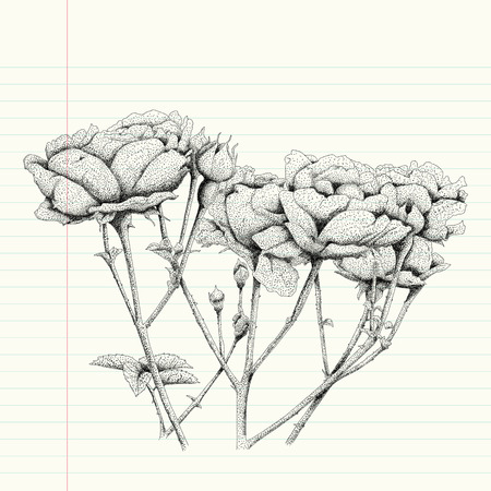 sketch drawing: pointillism drawing a rose flower, rose flower sketch drawing