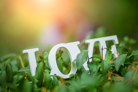 Word Love made with white  letters over the wooden surface on a green bush, Wedding composition, background Stock Photo