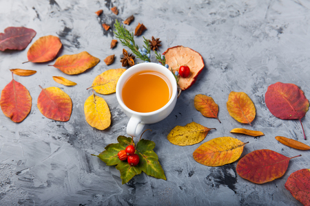 dark autumn still life with tea or coffee cup leaves pattern berries apple anise star pine on the grey background