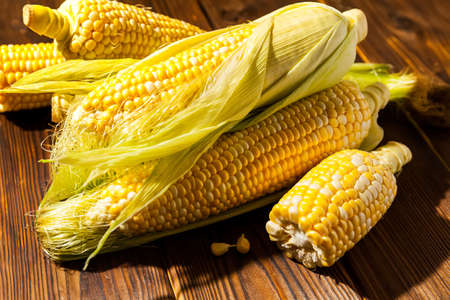 Group of Fresh sweet corn on cobs on wooden table, closeup, with hard sun shadow. Fresh yellow corns ears with leaves. Ears of freshly harvested yellow sweet corn on wooden table.