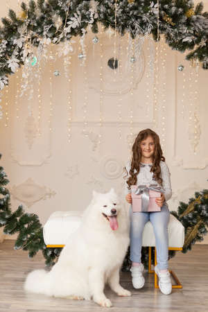 Little cute girl in blue jeans with christmas present and samoyed dog in a beautiful studio with festive decor, spruce arch and Christmas decorations