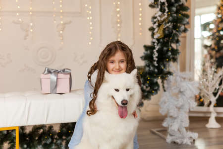 Little cute girl hugs samoyed dog in a beautiful studio with festive decor, spruce arch and Christmas decorations Stock Photo