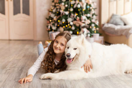 Christmas Child girl hug dog Samoyed. Christmas, winter and people concept. Christmas greeting card. Happy New Year. New Year at home Stock Photo