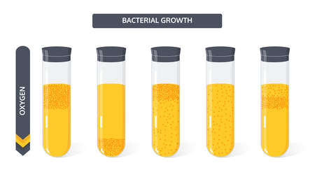 Growth of bacteria colony in the culture medium in the glass vial from the amount of oxygen. Microbiology vector concept.
