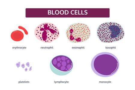 Vector set of blood cells in flat style. White blood cells - basophil; eosinophil; monocyte; neutrophil; lymphocyte. Red blood cells -erythrocyte. Patelets. Vector Illustration