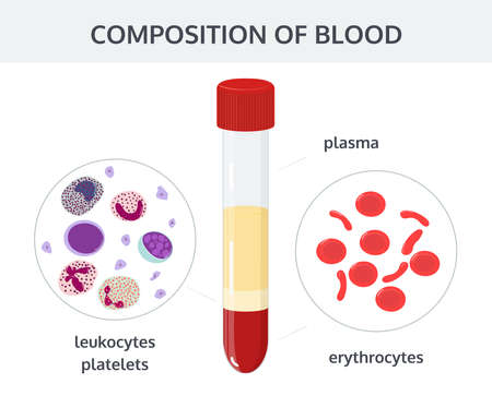 Medical vector concept: blood analysis in test tubes and blood cells: erythrocytes, leukocytes, platelets.