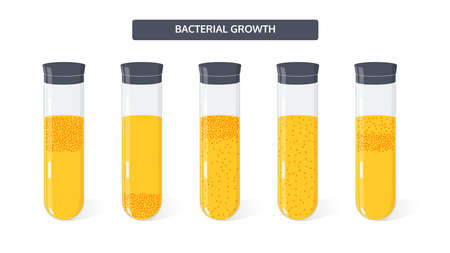 Microbiology vector concept. Growth of colony of bacteria in medical test tubes.