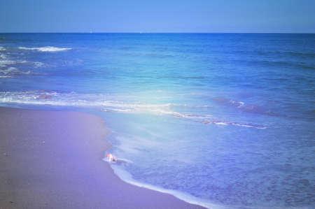 海岸での貝殻