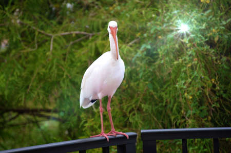 Egret checking you out! photo