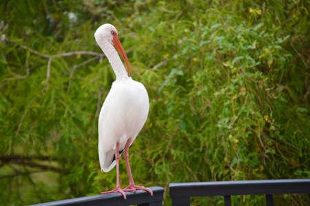 Egret looking a bit tiffed!