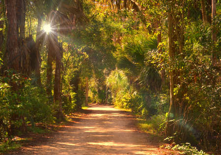 Light shining through path in the woods photo