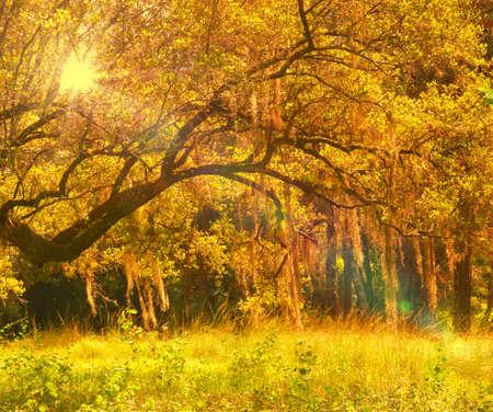 glistening: Spanish moss glistening in the sun