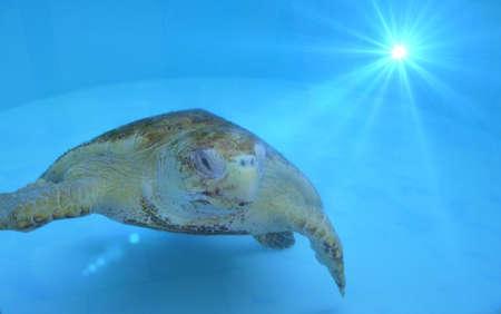 coy: coy turtle