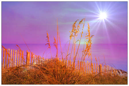 sea oats: sunlight glistening on the sea oats