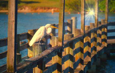 inspired heron photo